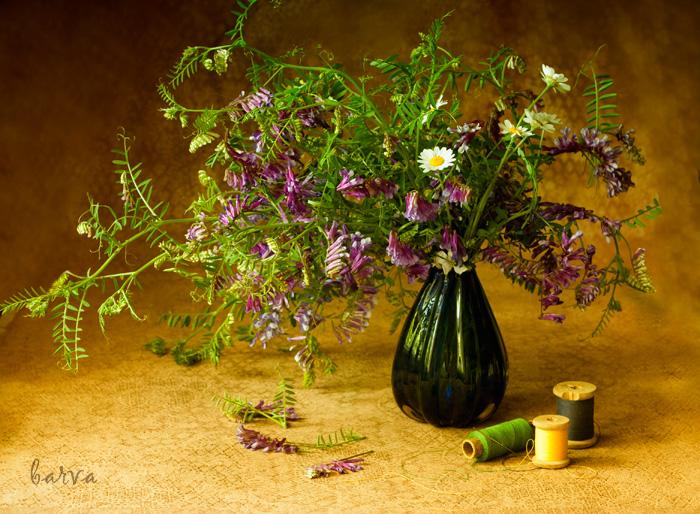 Полевые цветы натюрморт