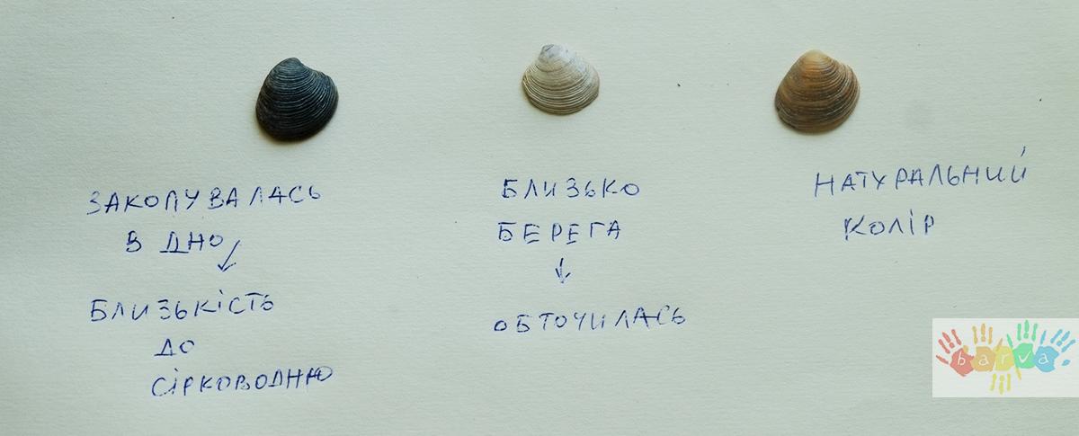 Молюски чорного моря. Вікторина для дітей.